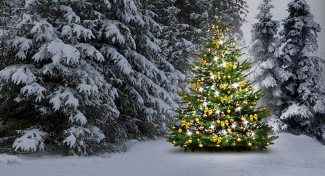 oh tannenbaum der zauber von weihnachten. Black Bedroom Furniture Sets. Home Design Ideas